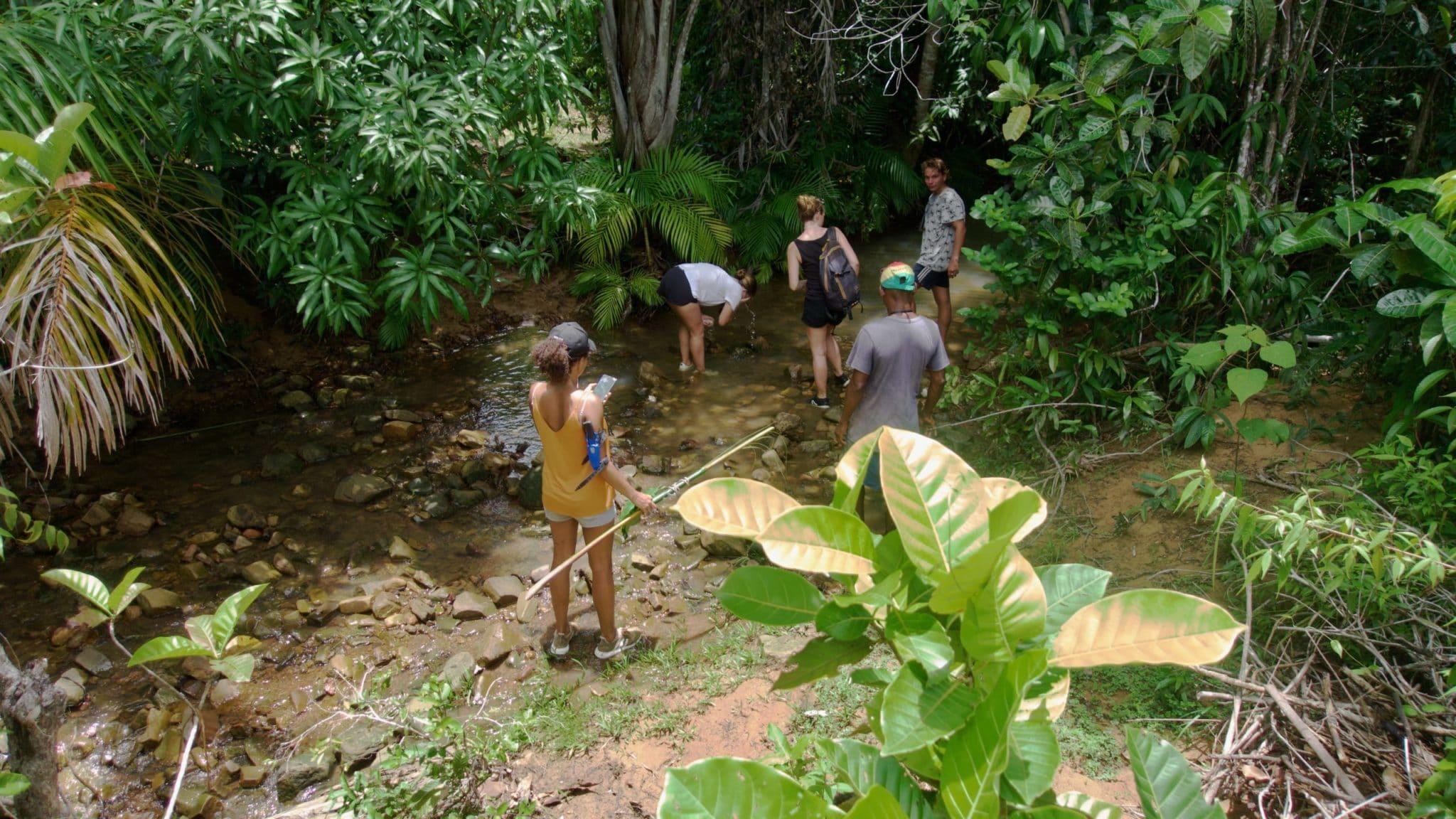 Forêt côte ouest de Madagascar