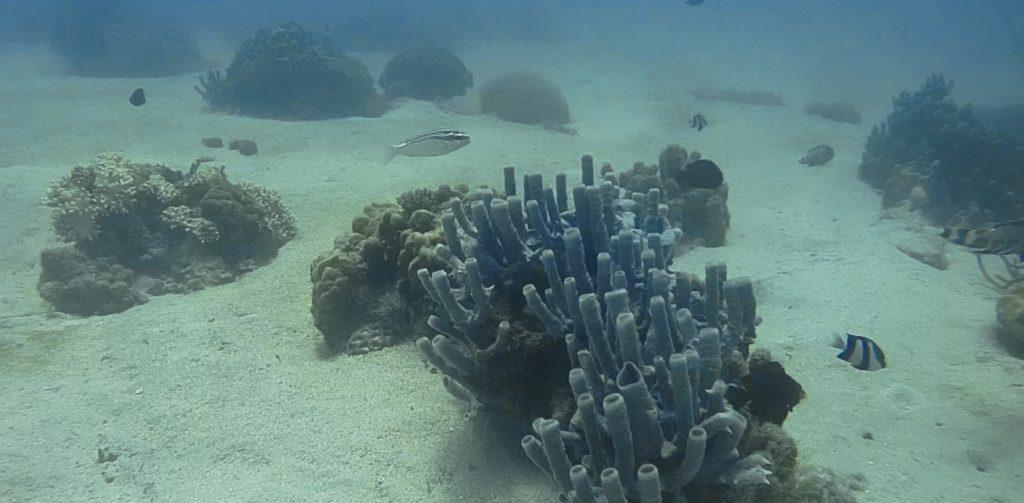 Plongée et snorkeling Madagascar